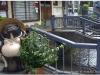 20120902-japonia-kanazawa-82