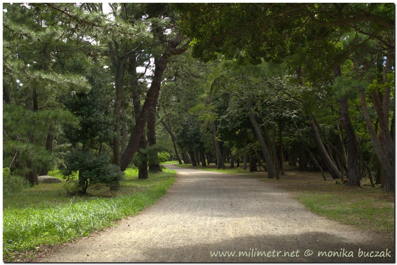 20120903-japonia-amanohashidate-25