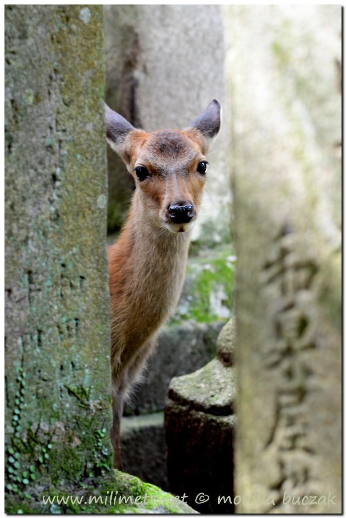 20120905-japonia-nara-92