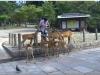 20120905-japonia-nara-54