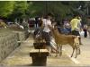 20120905-japonia-nara-65
