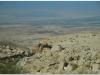 20101102-jordania-2-morze-matwe-13