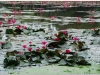 20081121-kambodza-siem-reap-134