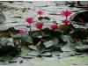 20081121-kambodza-siem-reap-136