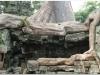 20081121-kambodza-siem-reap-267