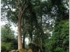 20081122-kambodza-siem-reap-138