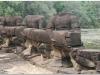 20081122-kambodza-siem-reap-75