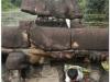 20081122-kambodza-siem-reap-77