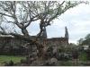 20081124-kambodza-laos-pakse-champasak-49