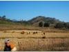 20081129-laos-ponsavanh-luang-prabang-23