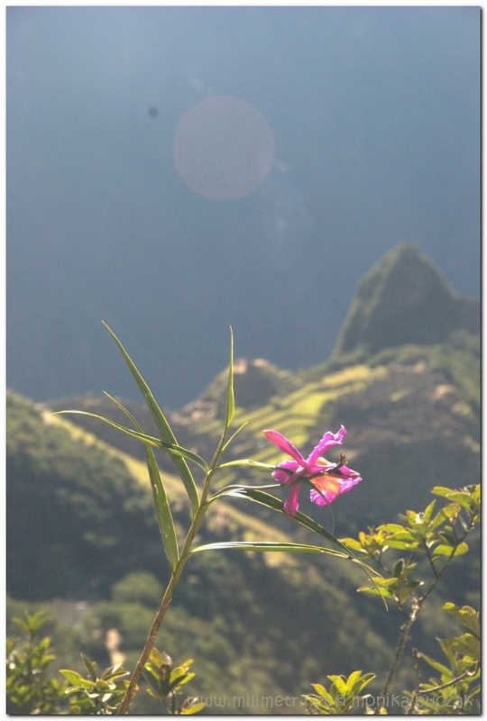 peru-20070729-machu-picchu-225