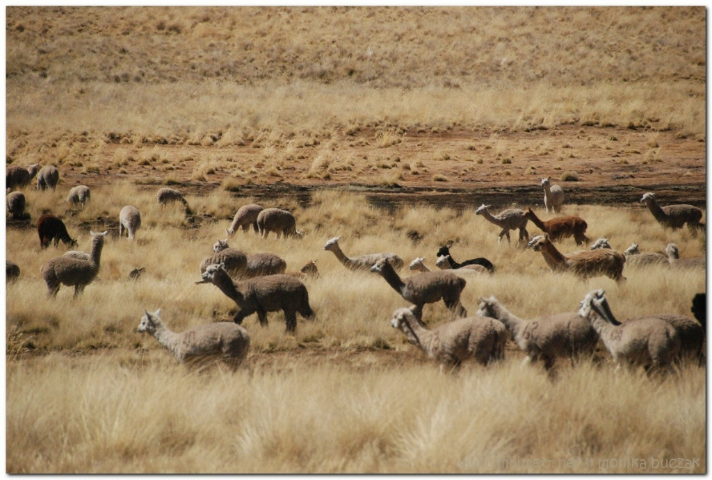 peru-20070730-cuzco-puno-23