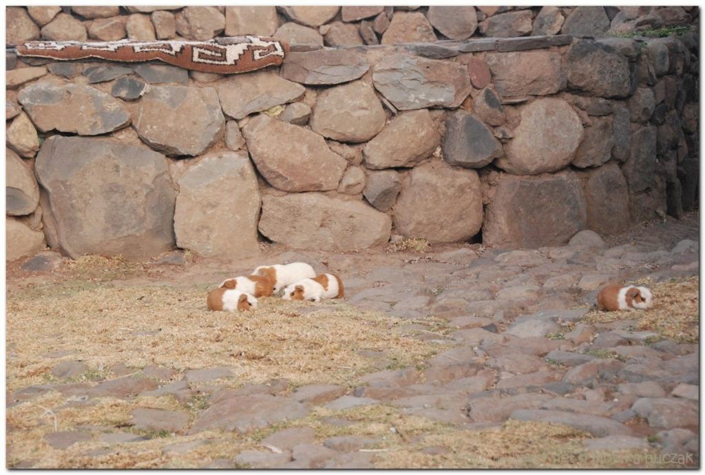 peru-20070731-puno-sillustani-78