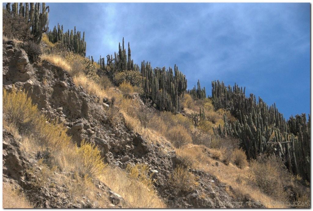 peru-20070805-arequipa-colca-69