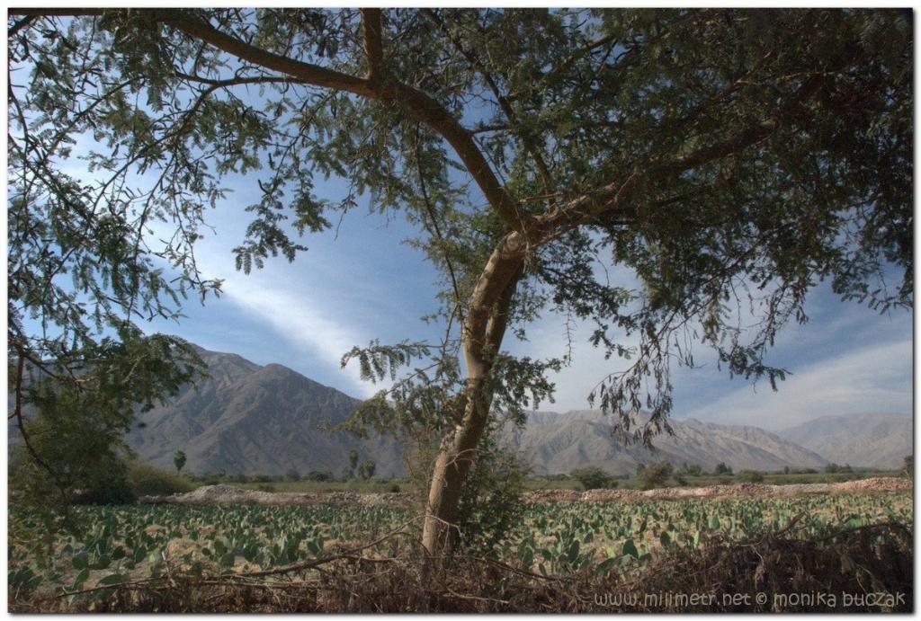 peru-20070808-nazca-156