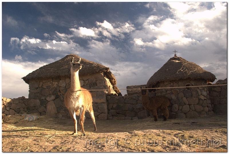 peru-20070731-puno-sillustani-63