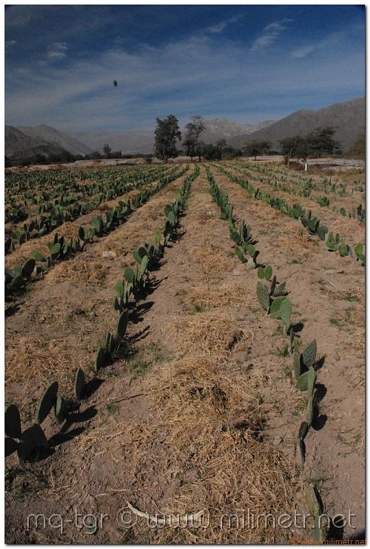 peru-20070808-nazca-142