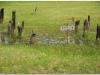 2007-0922-gasawa-biskupin-38