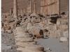 syria-2010-part2-palmyra-18