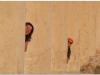 20101107-syria-palmyra-242