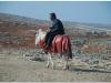20101112-syria-1-20