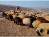 20101112-syria-1-23