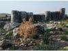 20101113-syria-4-apamea-35
