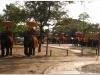 20081117-tajlandia-bangkok-1-ayuthaya-15