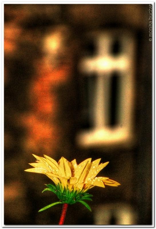 20090531-okno-na-podworze