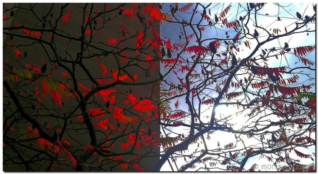 20111017-jesie-na-ursynowie