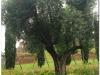 italia20080522-6