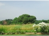 italia20080529-appia-31