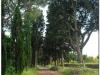 italia20080529-appia-47